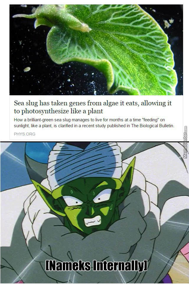Proof That Dbz Is In The Future
