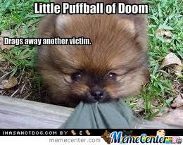 Puffball, Please Don't Hurt Me