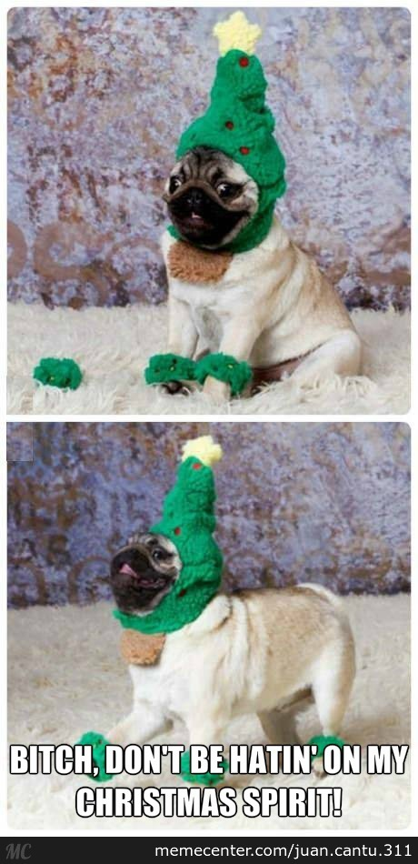 Pug Has A Lot Of Christmas Spirit