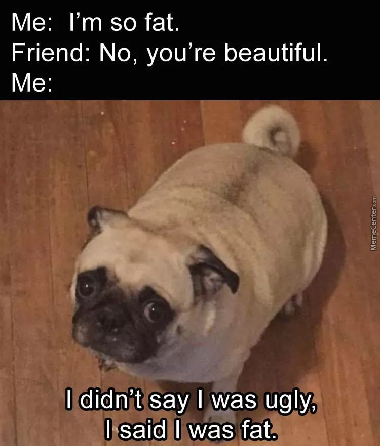 Pugs Are Fat And Cute