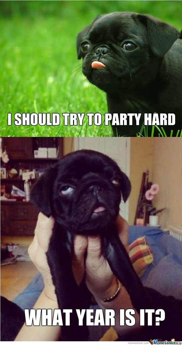 Pugs Never Learn Do They?