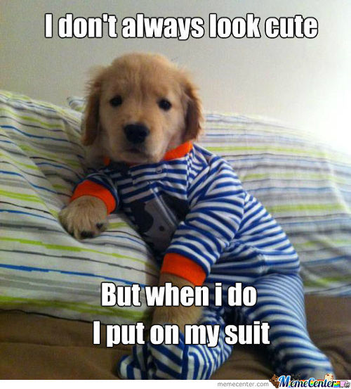 puppy_c_1167573 cute puppy memes best collection of funny cute puppy pictures