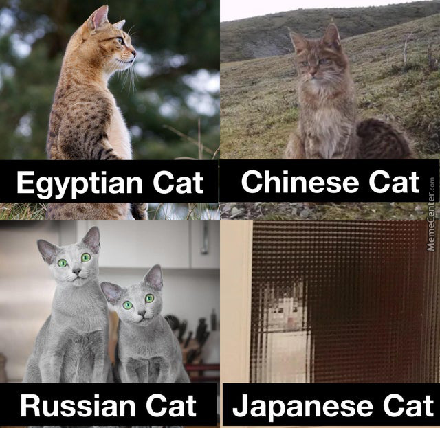 Pussy (Cats) From Around The World
