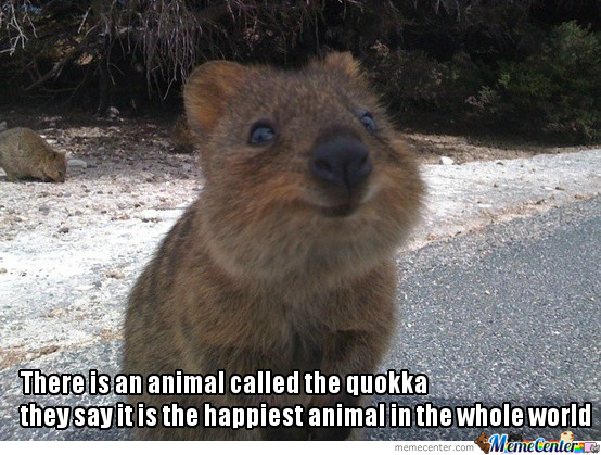 Quokka The Cute....love You So Much Baby by bemar.dayot ...
