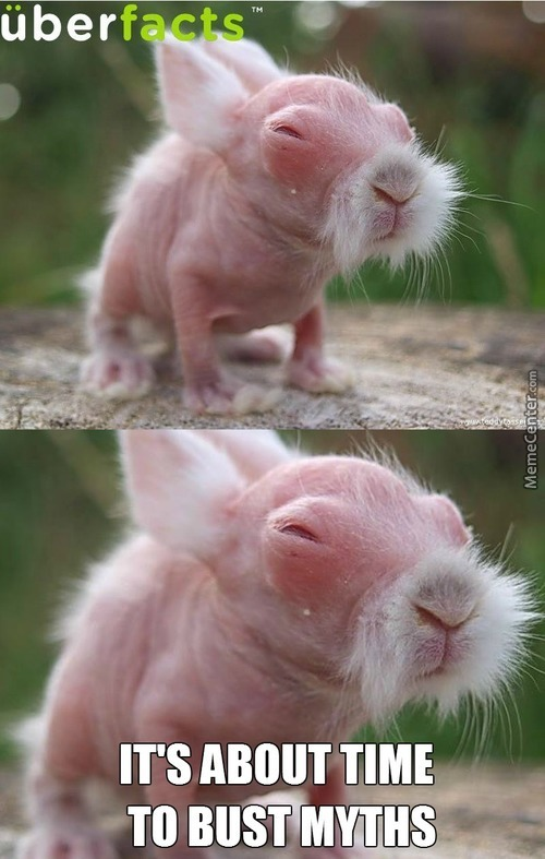 Rabbit Without Hair. Cute As Shit