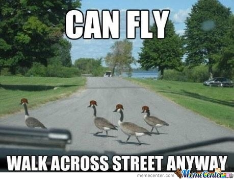 Ran Over Some Ducks? They Should Have Flown.