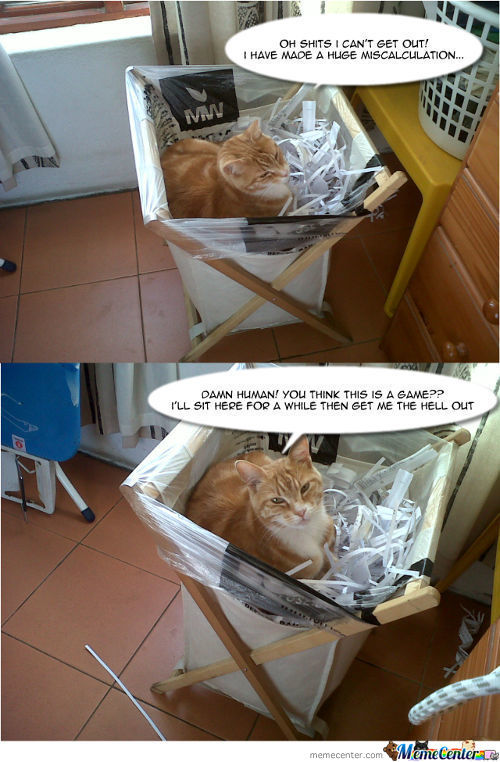 Recycled Kitteh