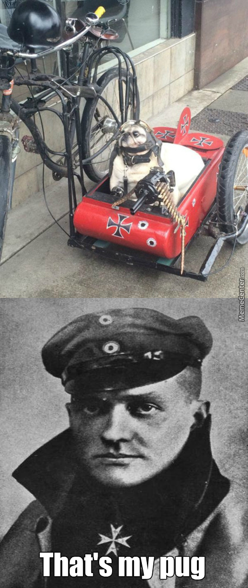 Red Baron's Pug Has Been Spotted ! Load The Guns With Biscuits !