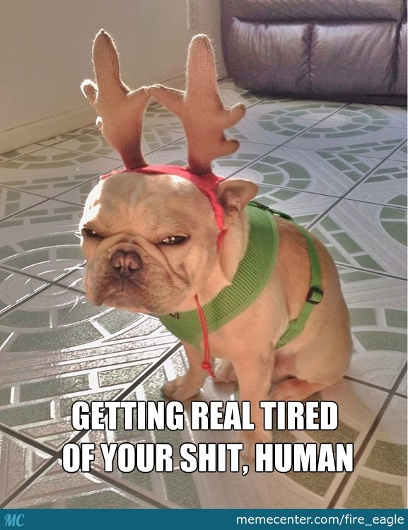 Reindeer Dog Is Not Amused