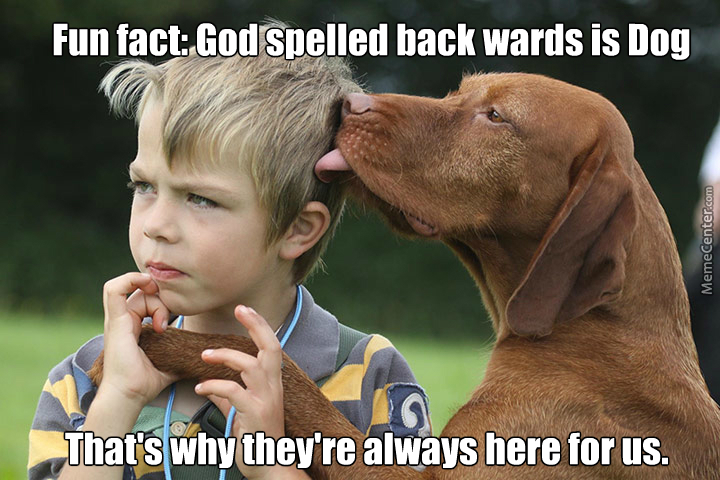 Religions: 0 Dogs: 1