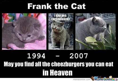 Rest In Peace Frank The Cat
