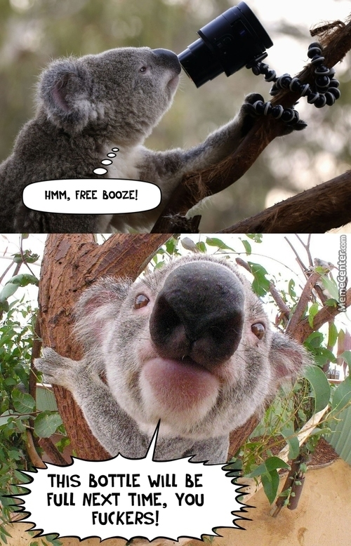 Richard, The Drunk Koala