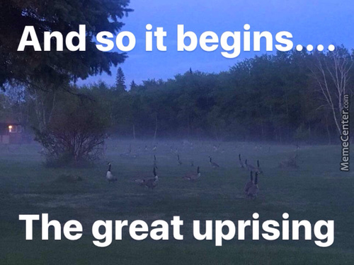 Rise Of The Geese