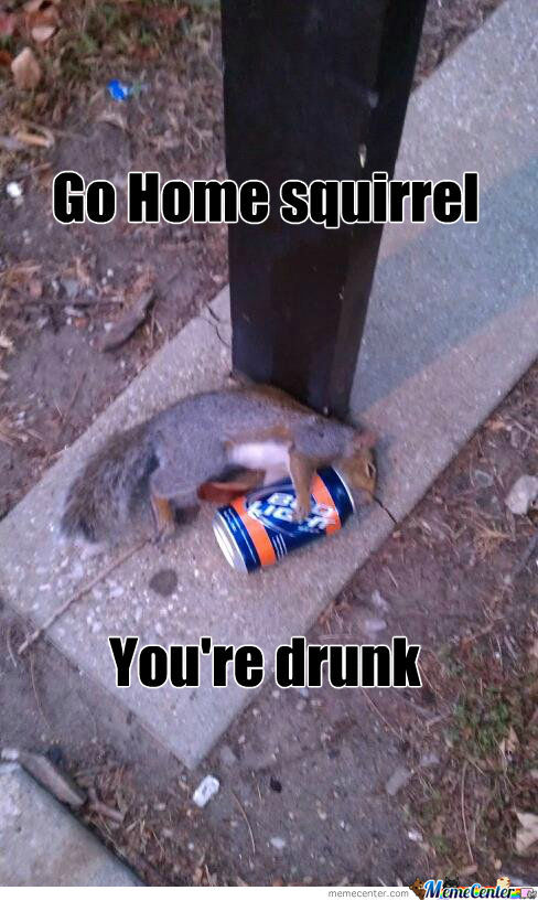 [RMX] Squirrel's know how to party