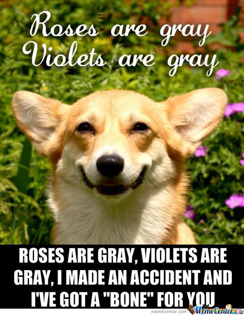Roses Are Gray, Violets Are Gray