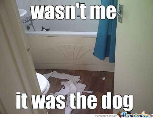 Rule Of Cats #1 If Caught Blame The Dog