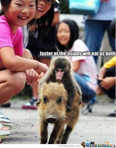 Run Faster Little Pig