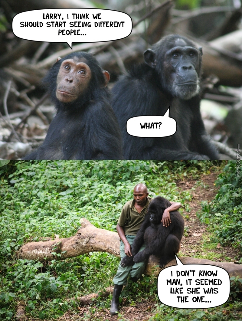 chimp memes best collection of funny chimp pictures