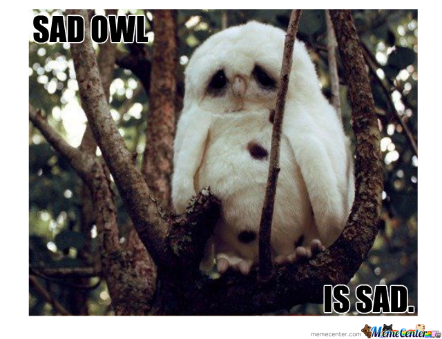 What are you doing now? - Page 25 Sad-owl_o_298454