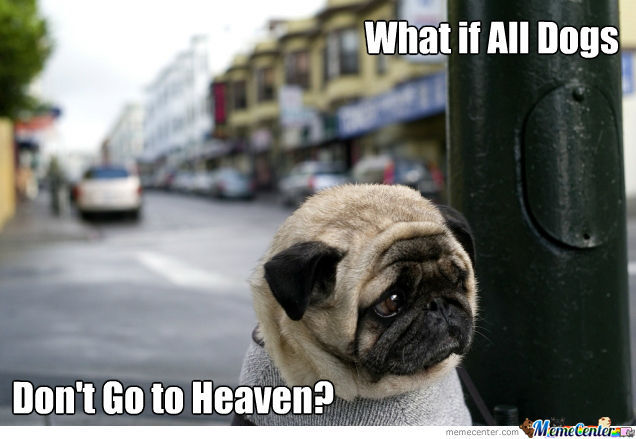 Sad Pug Questioning His Faith