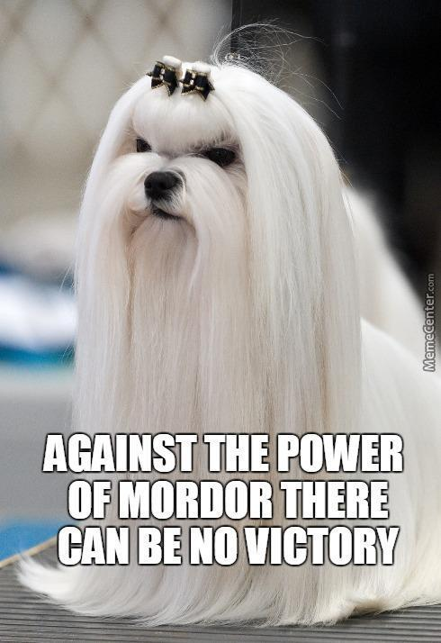 Saruman The Dog