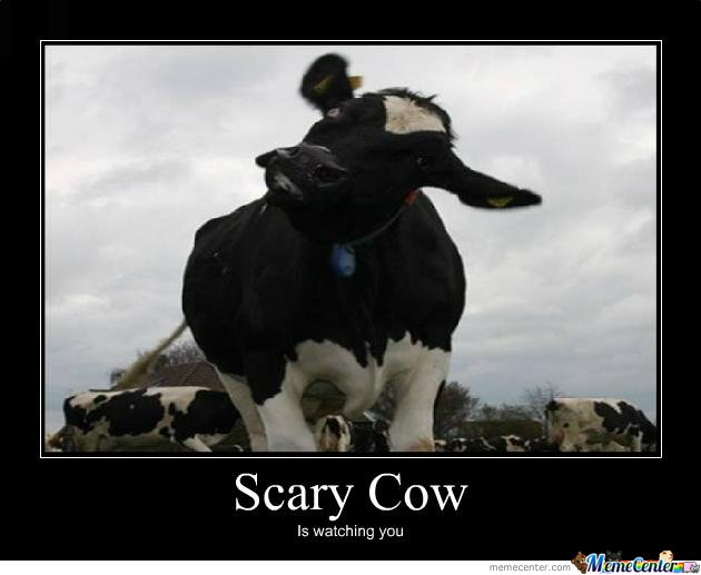 Popular Scary Chicken Meme: Scary Cow By Annediao