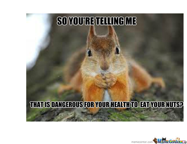 Sceptical Squirrel by randall82 - Meme Center