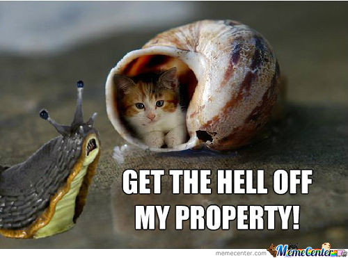 Screw You Snail Cat