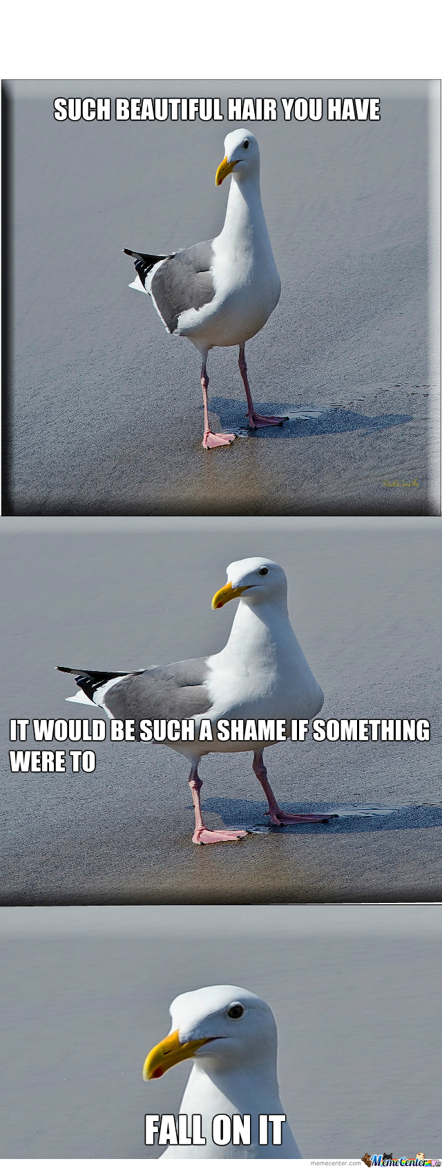 Scumbag Seagull On The Loose