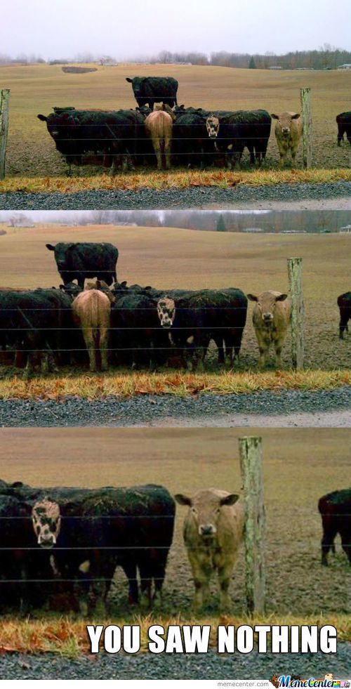 Secret Cow Meeting