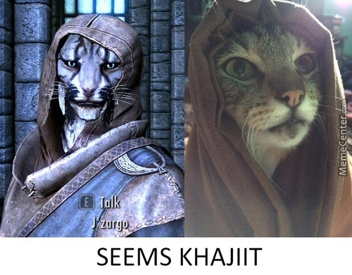 "Seems ""khajiit"""