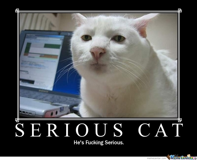 Not Funny Cat Meme : Serious cat is not amused by sirgengar meme center
