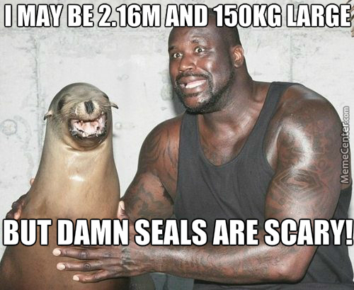 shaq seal the new navy seal shaq amp gt everyone_o_3326561 seal memes best collection of funny seal pictures,Seal Meme