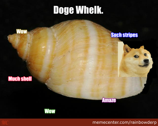 shibe the doge whelk_o_2460213 shibe the doge whelk by rainbowderp meme center