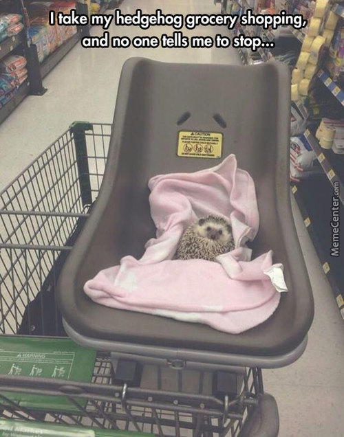 Shopping With The Hedgehog