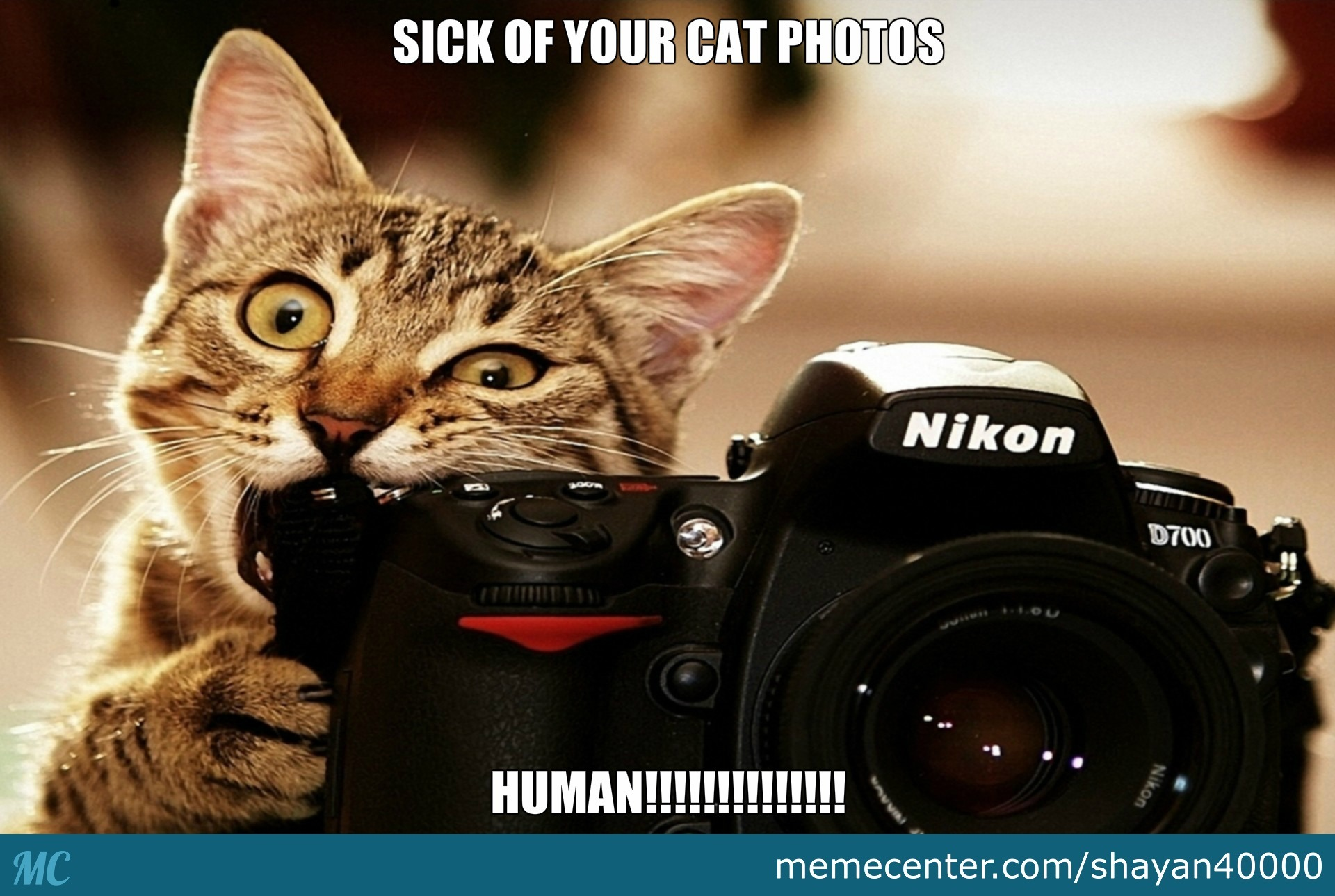 sick of your cat memes human_o_2503009 sick of your cat memes human! by shayan40000 meme center