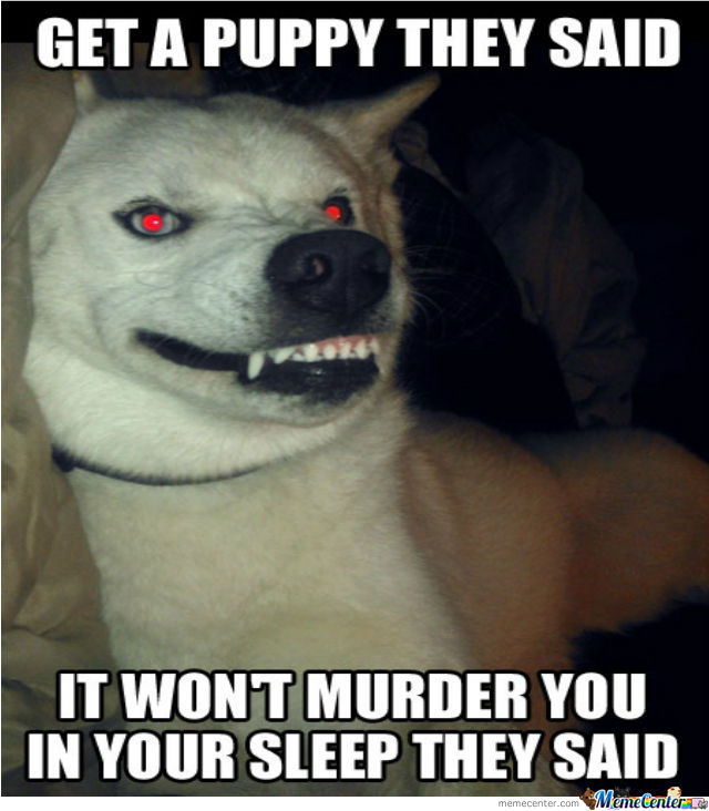 silly evil puppy_o_1395135 silly evil puppy by recyclebin meme center