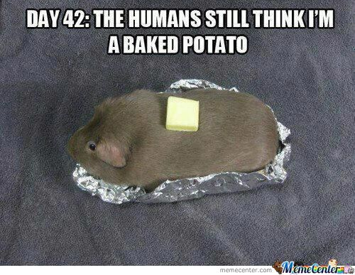 Silly Humans...