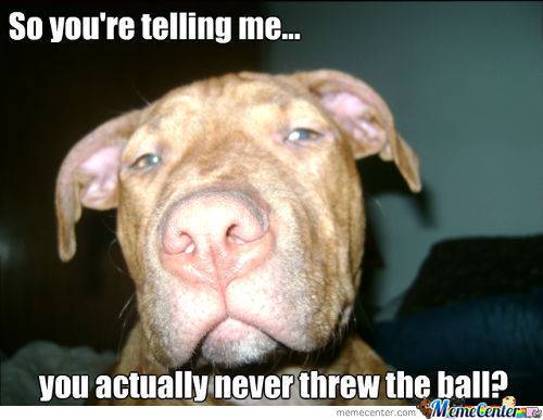 Skeptical Pitbull 2