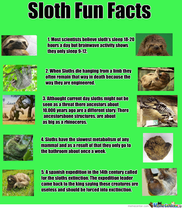 Sloth Fun Facts! Like And Fallow For The Other Half by