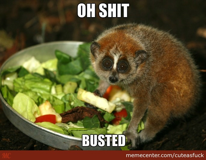 Slow Loris Love Salad