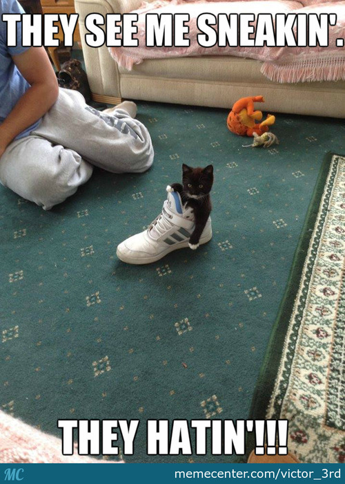 Sneaker Kitten Gonna Sneak!