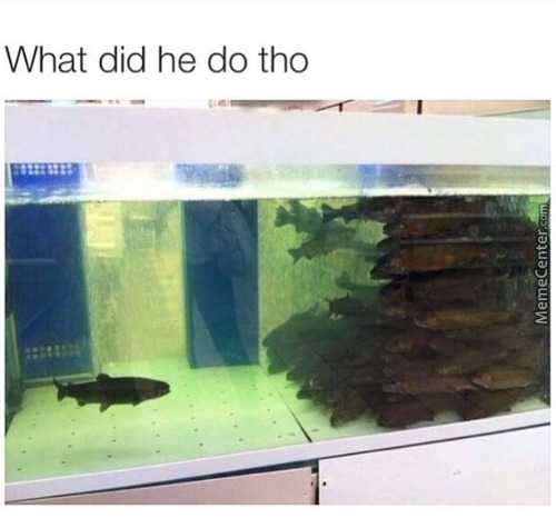 """Snitching. Last Week He Was Talking To Nemo, Next Day """"the Net"""" Came And Scooped Up Nemo. We Ain't Seen Him Since."""