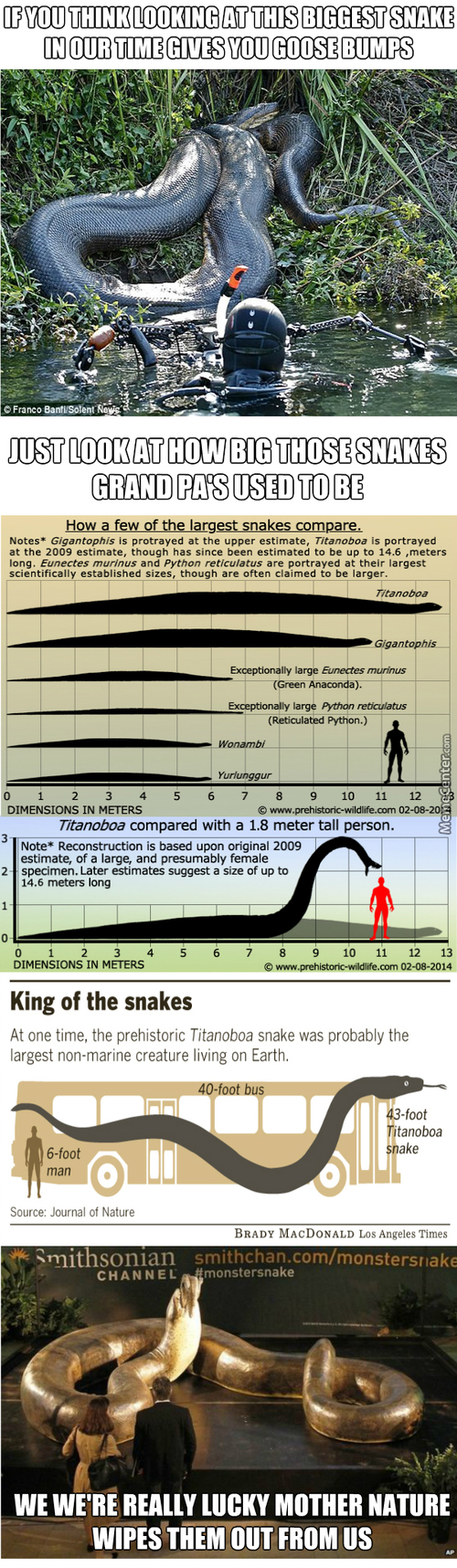 Some Info's About Nopes Of Our Ancient Time
