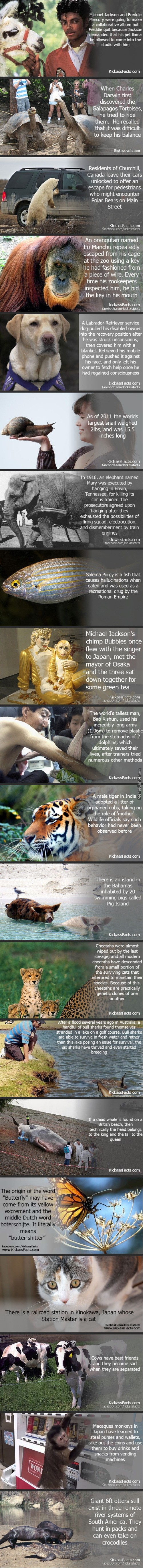 Some Interesting Animal Facts