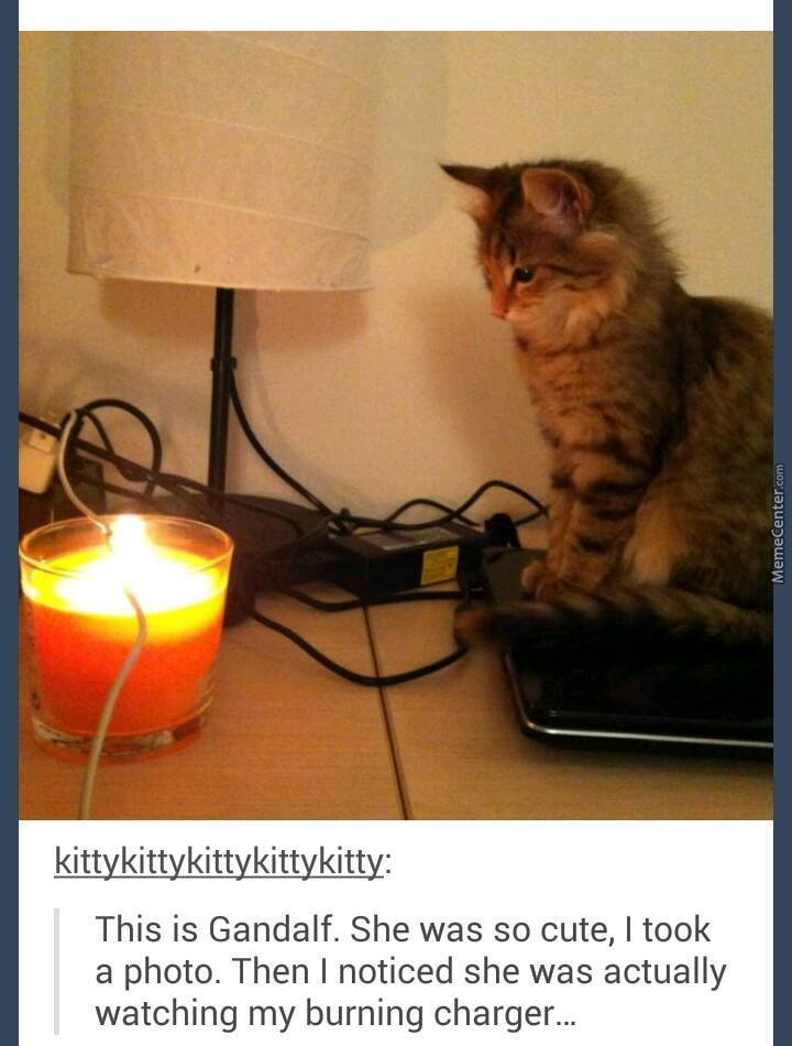 Some Pussies Just Want To Watch The Wires Burn