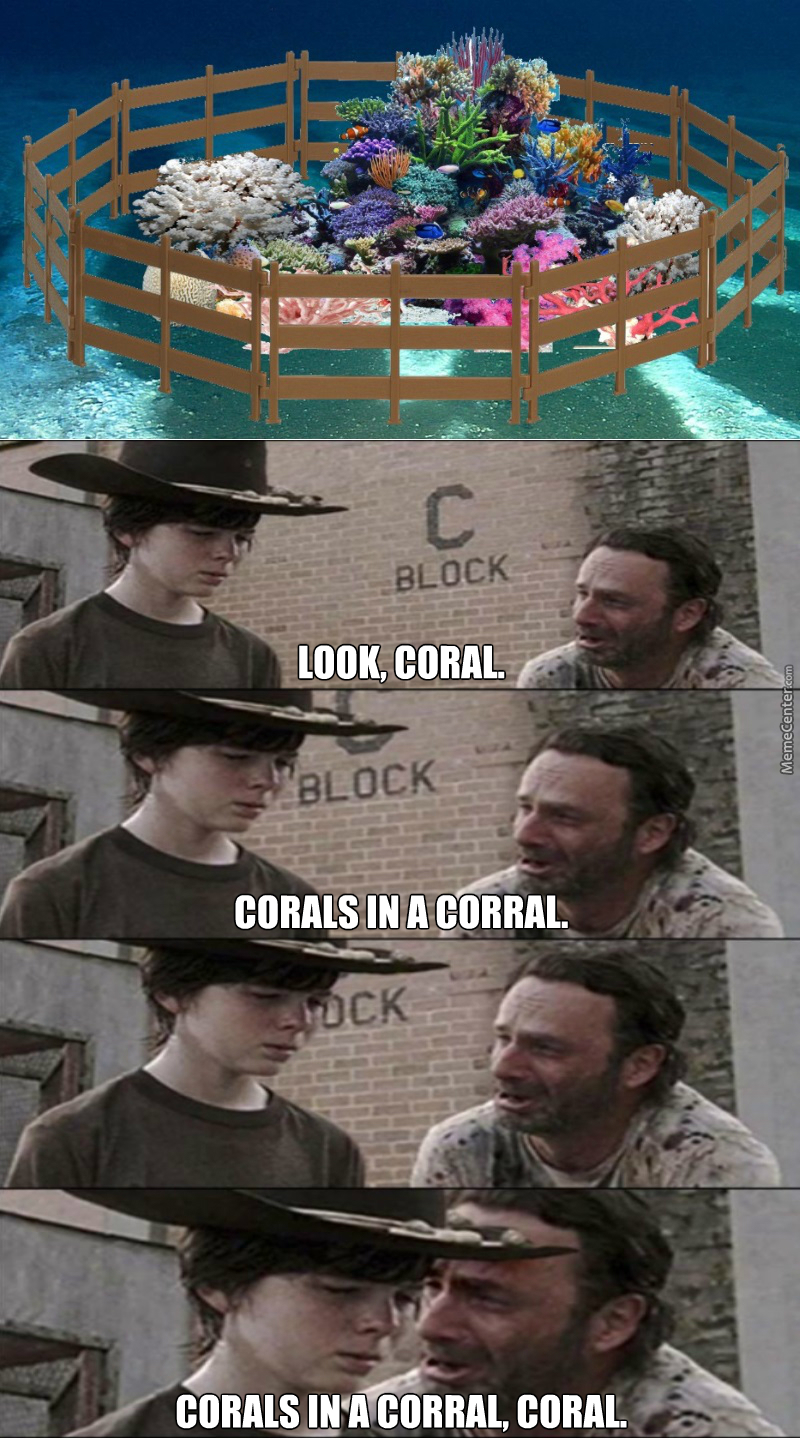 someone make a coral coral so we can put coral corals in a corall made of coral corals_o_6694367 coral memes best collection of funny coral pictures