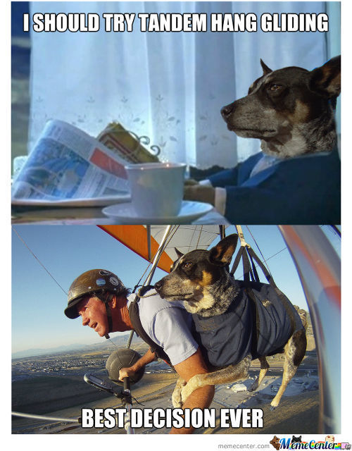 Sophisticated Dog Want To Try Hang Gliding