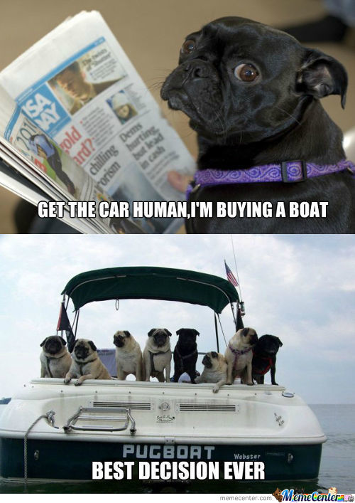 Sophisticated Pug Buys A Boat