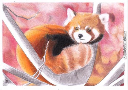 Sorry, Not A Meme. A Little Drawing Of A Red Panda Which I Drew Back In January